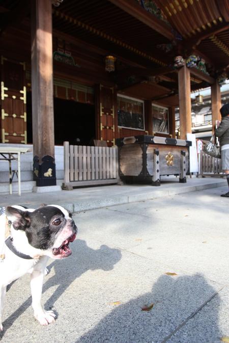 gosuke0508_003.jpg
