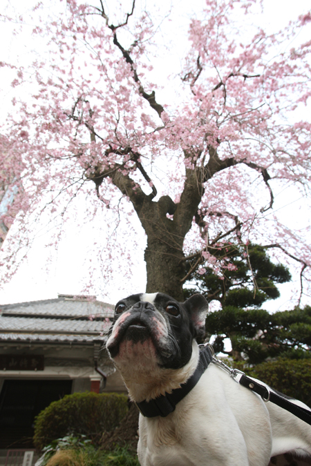 gosuke0508_008.jpg