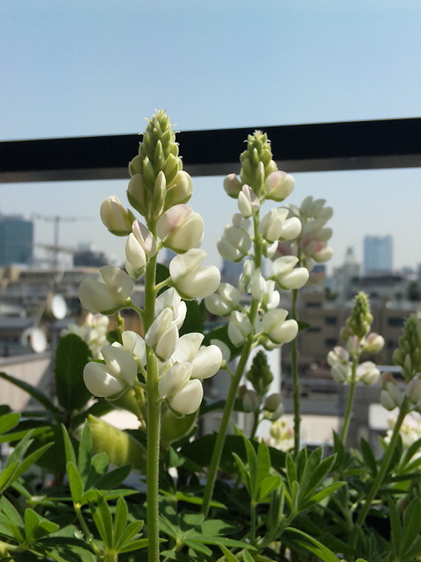 100413_flower_01.jpg