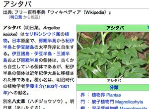 ashitaba.jpg